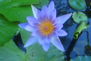 IRTC FLOWER.jpg