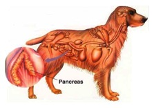Pancreatitis.jpeg