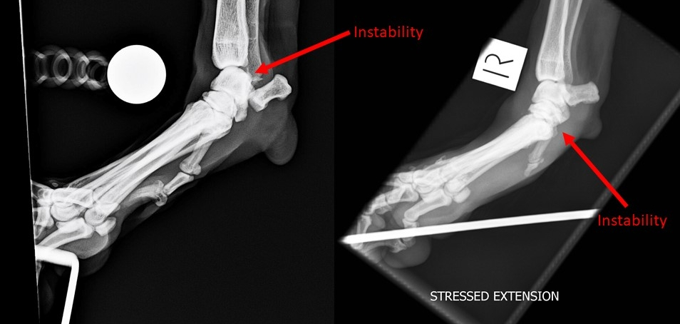 Abnormal extension at the radial-carpal joint on the left image. Abnormal extension at the carpal-metacarpal joint on the left image.