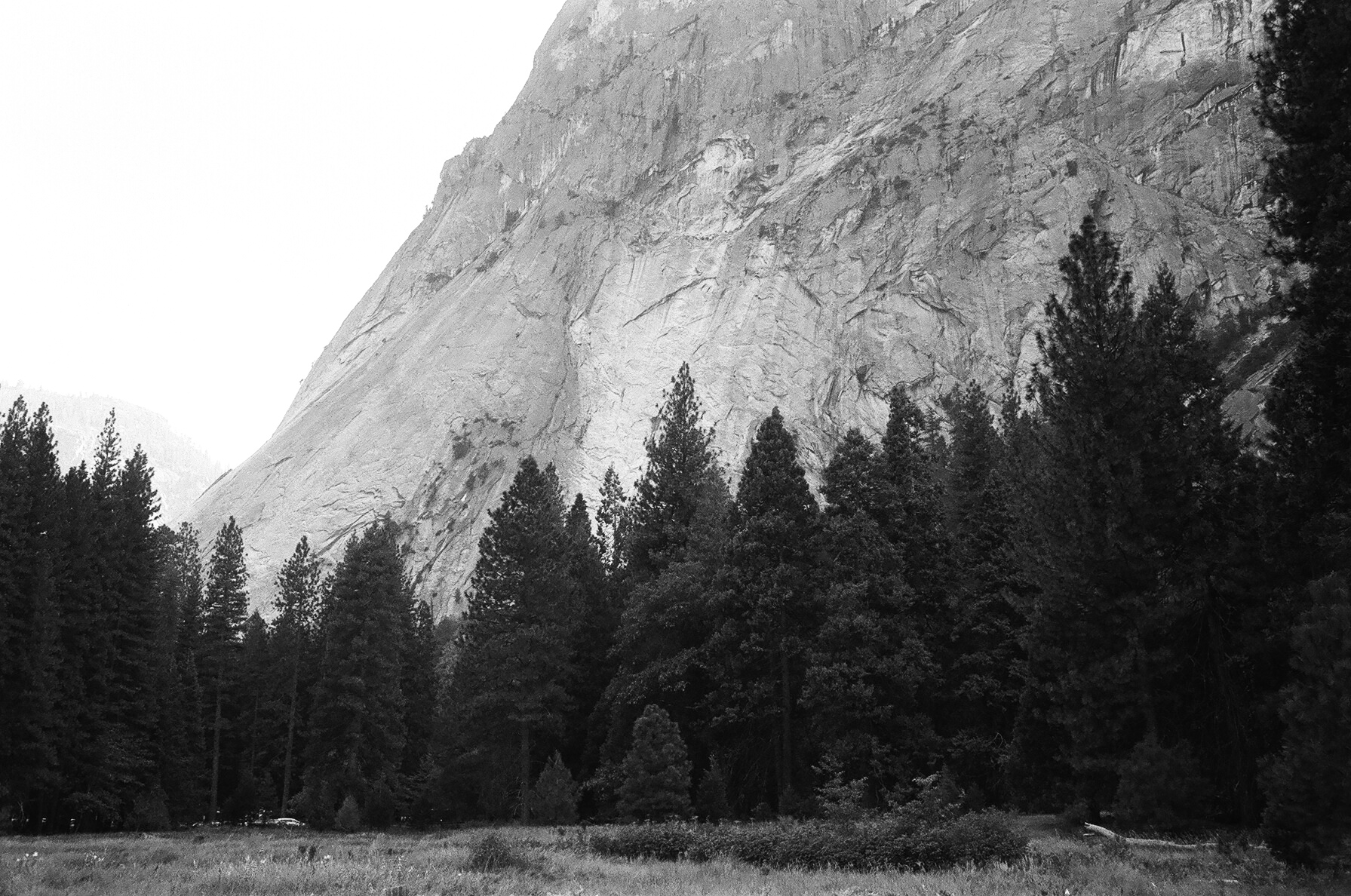 trees in yosemite