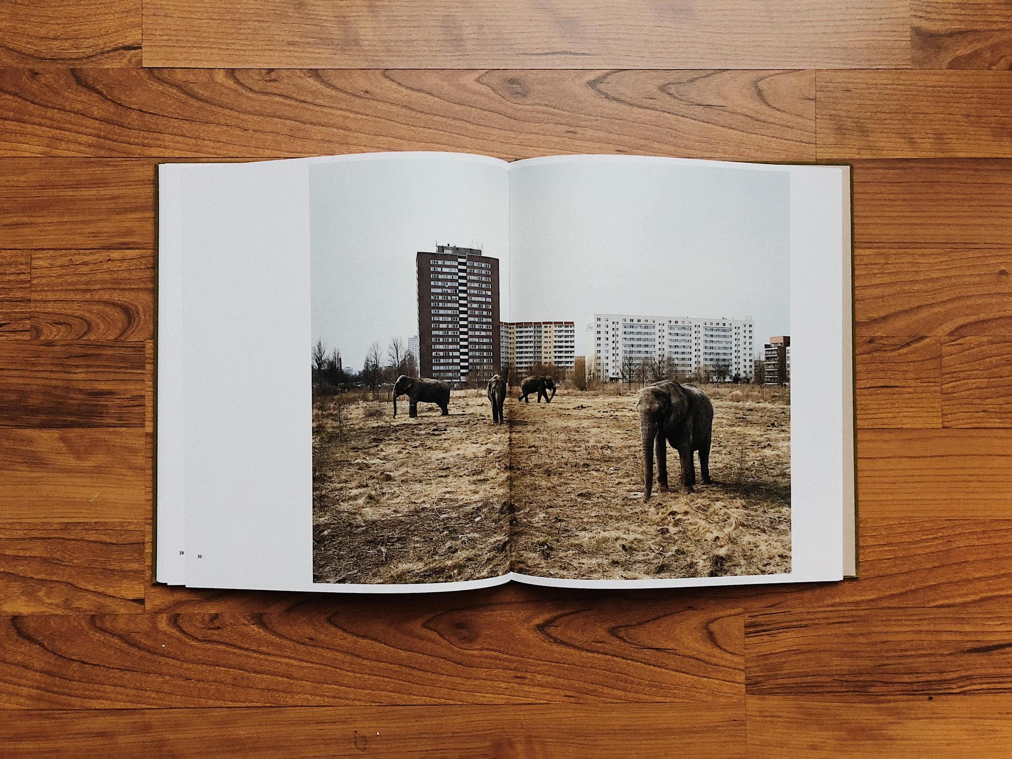 Elephant Photo Berlin Mitch Epstein