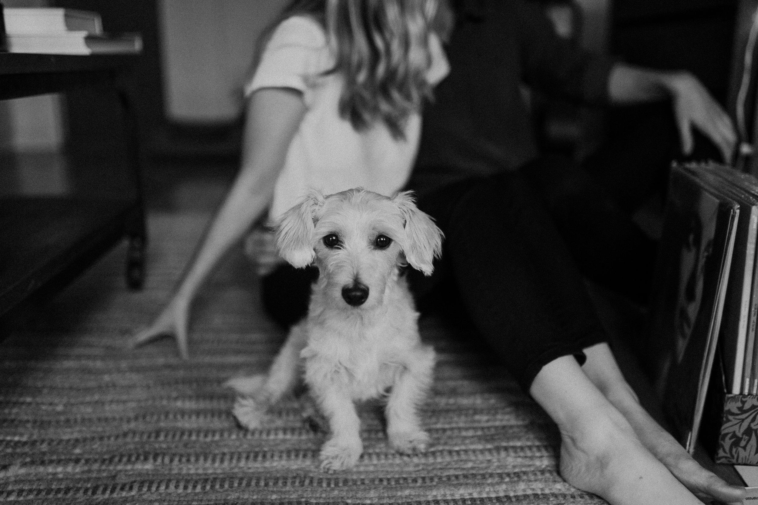 white haired dog names frankie