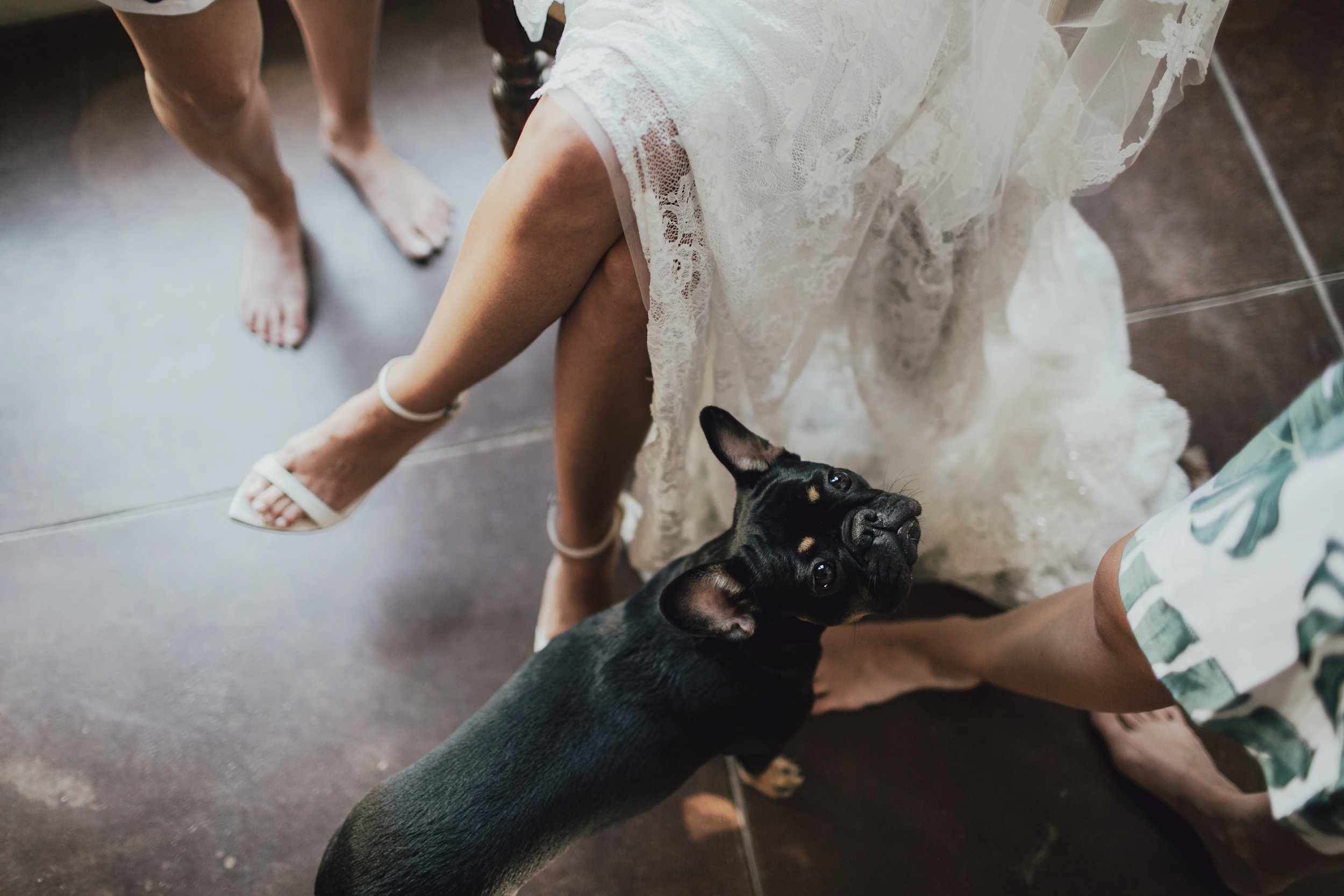 mackenna and her french bull dog on her wedding day