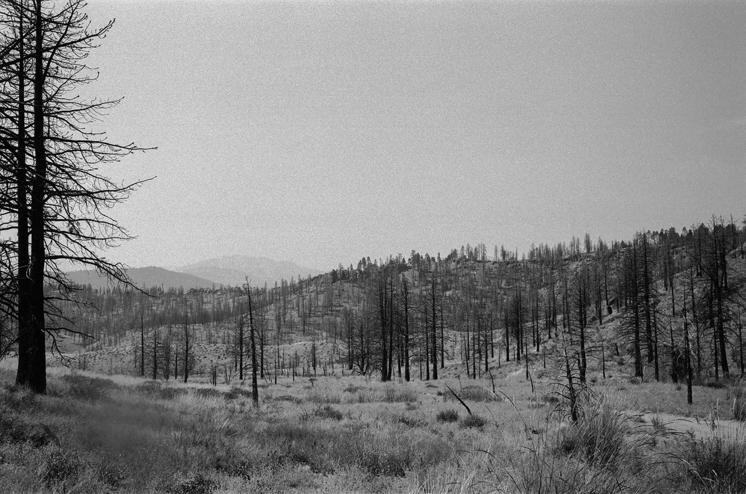 california sierras