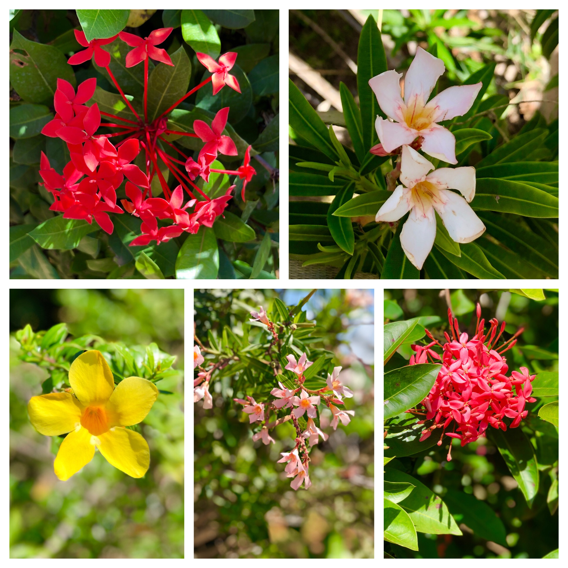 We were thankful for the beautiful flowers spotted mid-Winter…