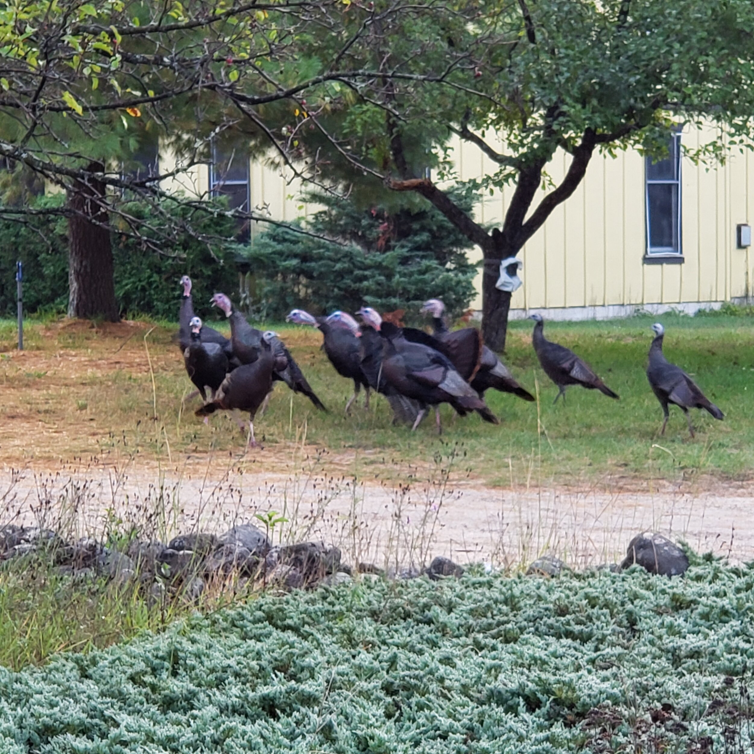 Every morning a flock of wild turkeys (11 by my count) would walk through the farm. I have never seen so many wild turkeys at once. I love the way they would wonder, a few going this way and a few going that way, but in the end, they all stayed together. This reminded me of our intimate retreat. It was a smaller retreat of only 80 women and I loved the small size as I got to visit with a lot of women and make some real connections. Some of us would go off and try out the napkin technique in our Bibles ( thanks Val) and others would go for walks. The retreat was a great time for connections. We all were there to further explore our visual faith in one way or another which made it a safe place to share what was on our hearts, whether that be victories or struggles. It was a very affirming time.