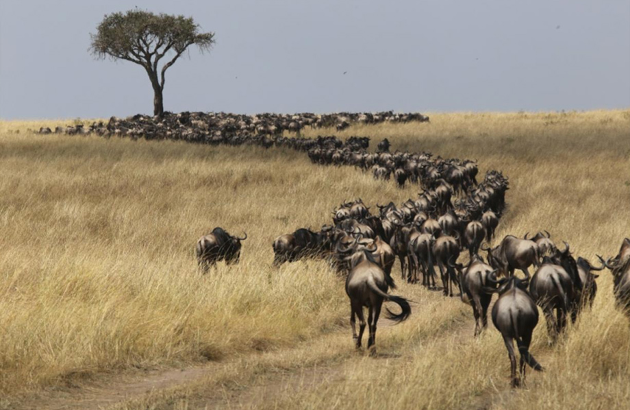 ANNUAL MIGRATION AFRICA TOUR