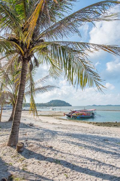 Koh Samui Palm Tree