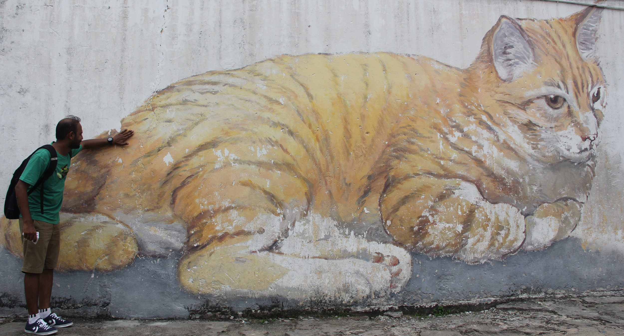 A BIIIIIIIIGGGGG Cat. This cat is gonna be difficult to pet. Difficult to miss this wall-sized treasure.