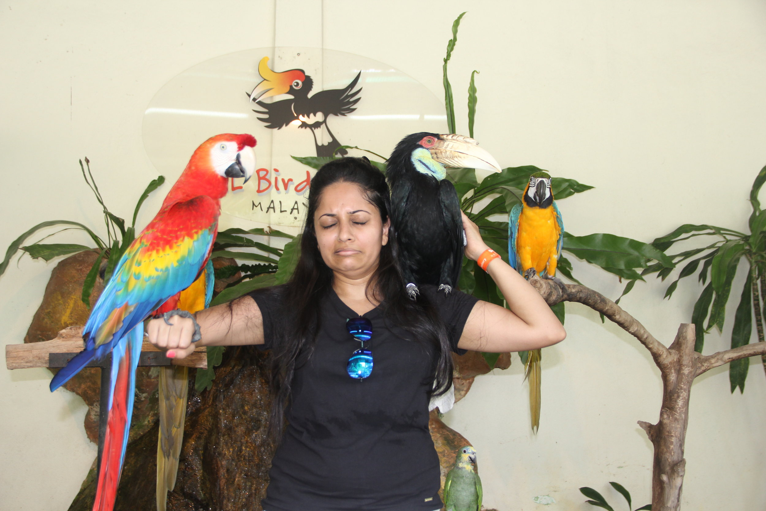 Some birds even scared me to death - Bird Photo Booth