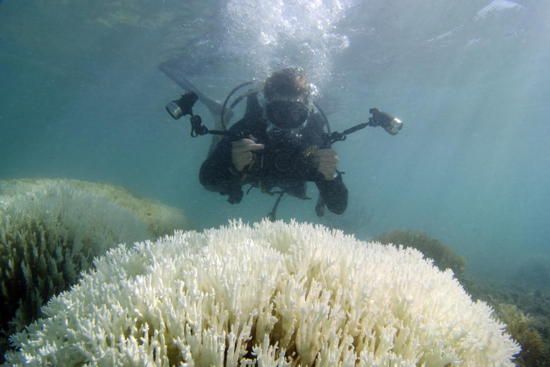 Coral-bleaching-1-1120x747.jpg