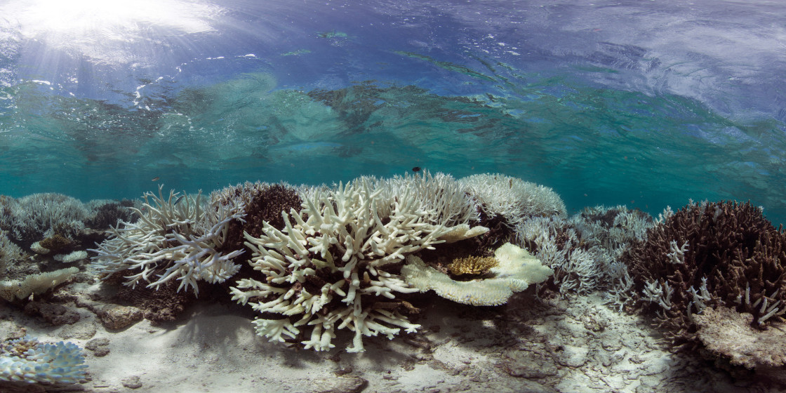 007-Coral-Bleaching-in-the-Maldives-Panorama-1-1120x560.jpg