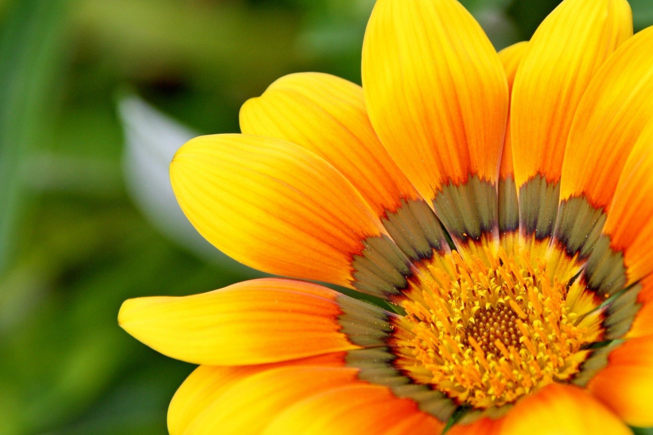 yellow-715540.jpg
