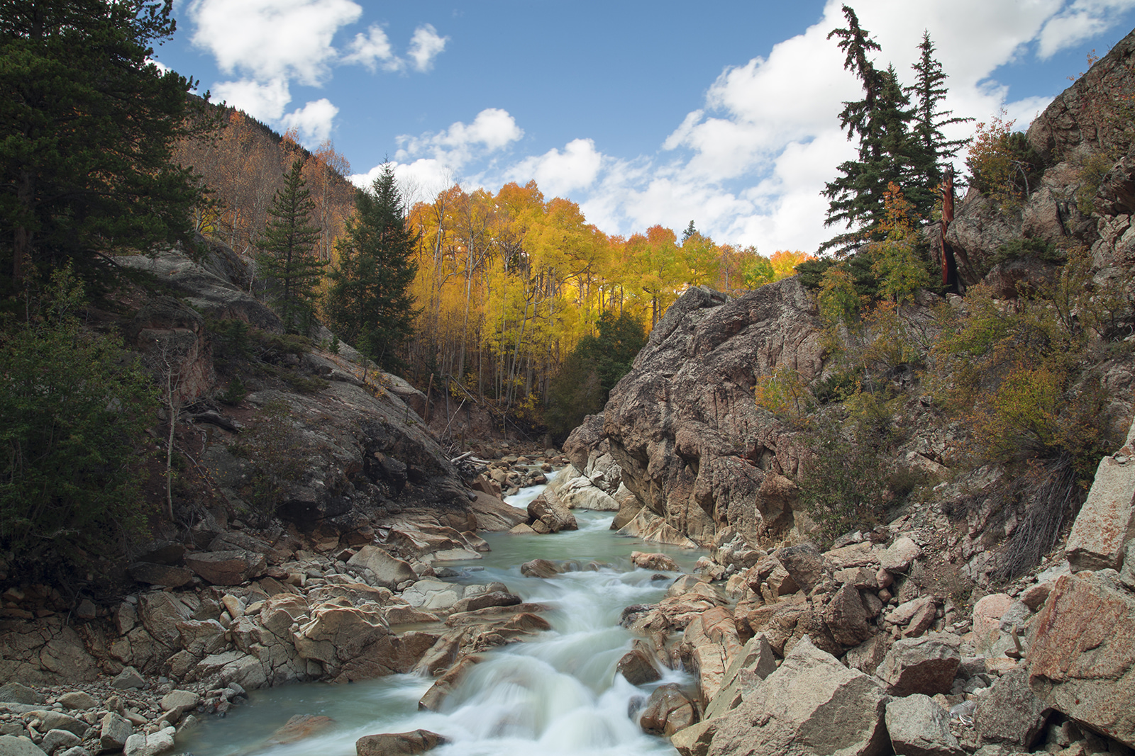 Higher Creek with Fall Trees.jpg
