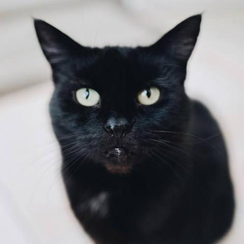 Ivy (Attack Cat)