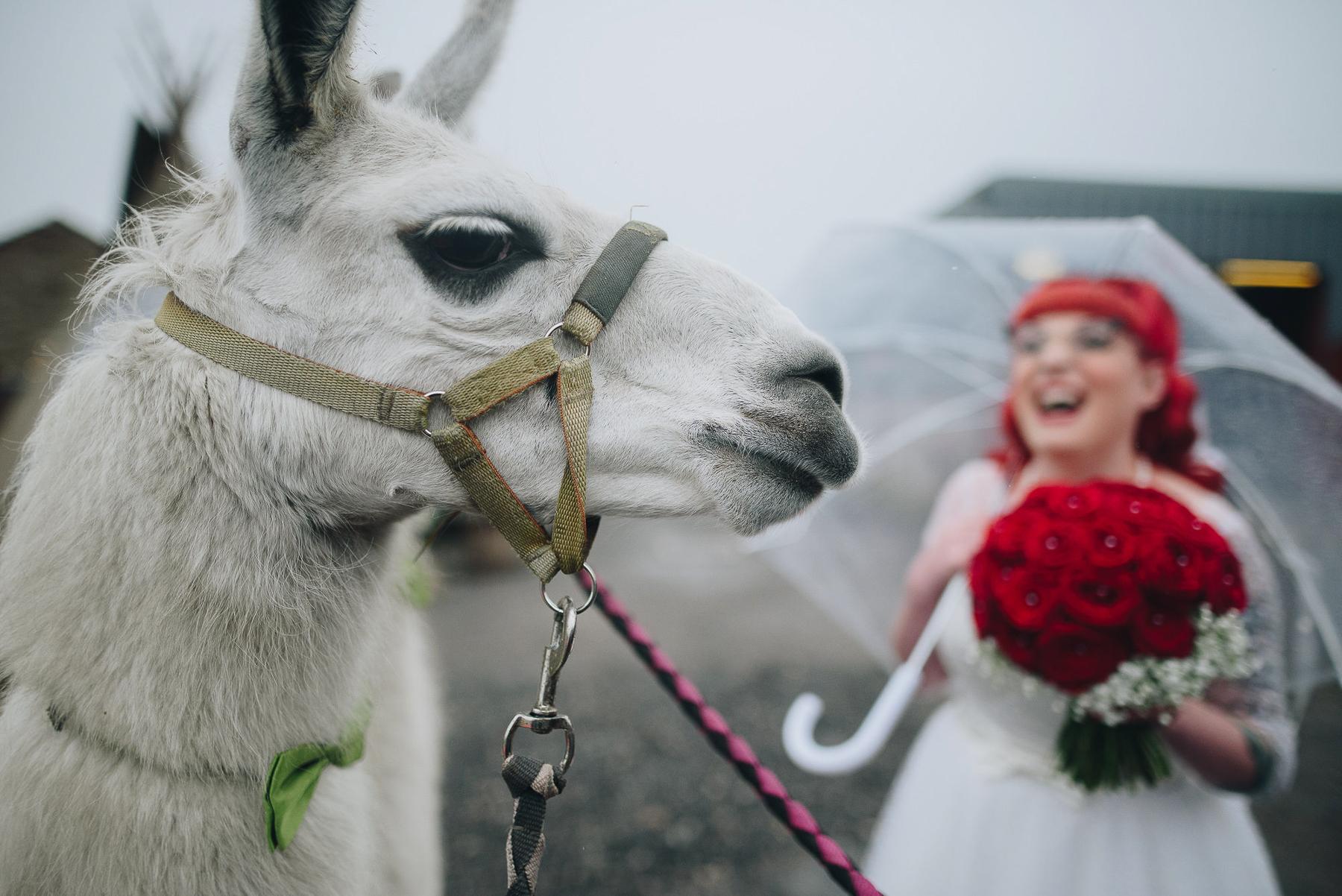 Wellbeing_Farm_Wedding_Photography_The_Pin-Up_Bride_Lara_Shaun-78.jpg