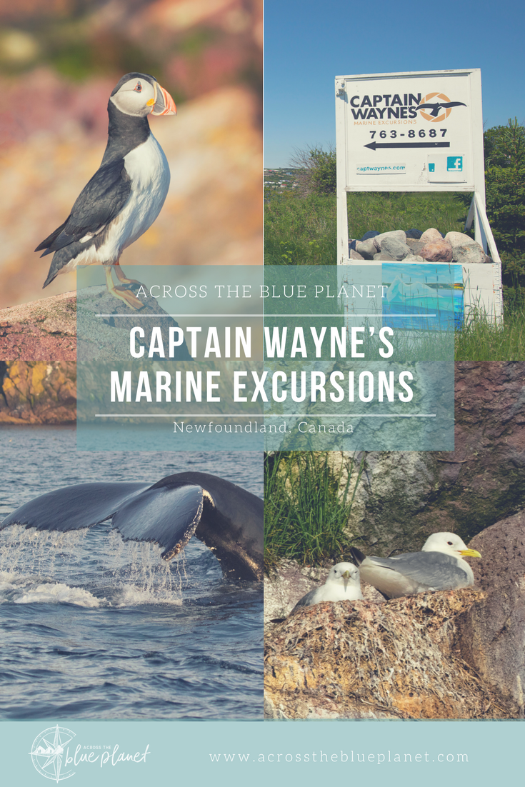 across the blue planet - Captain Wayne's Marine Excursions