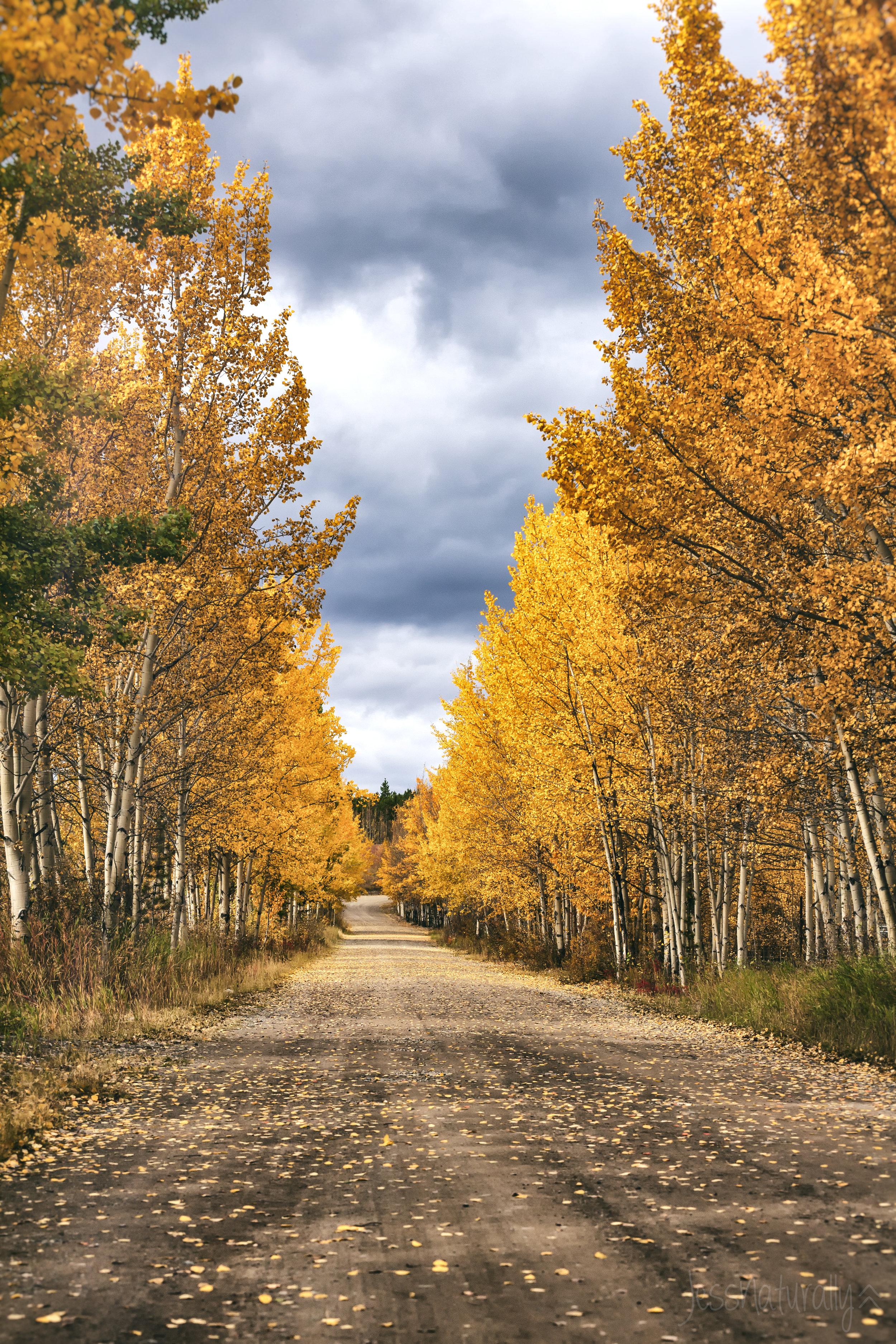 Yukon Fall Colours - Across the Blue Planet