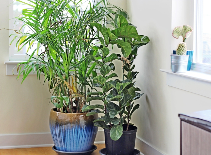 In addition to his other hobbies, the client is an avid gardener, and we chose to leave the windows uncovered without curtains to allow enough light for his plants.