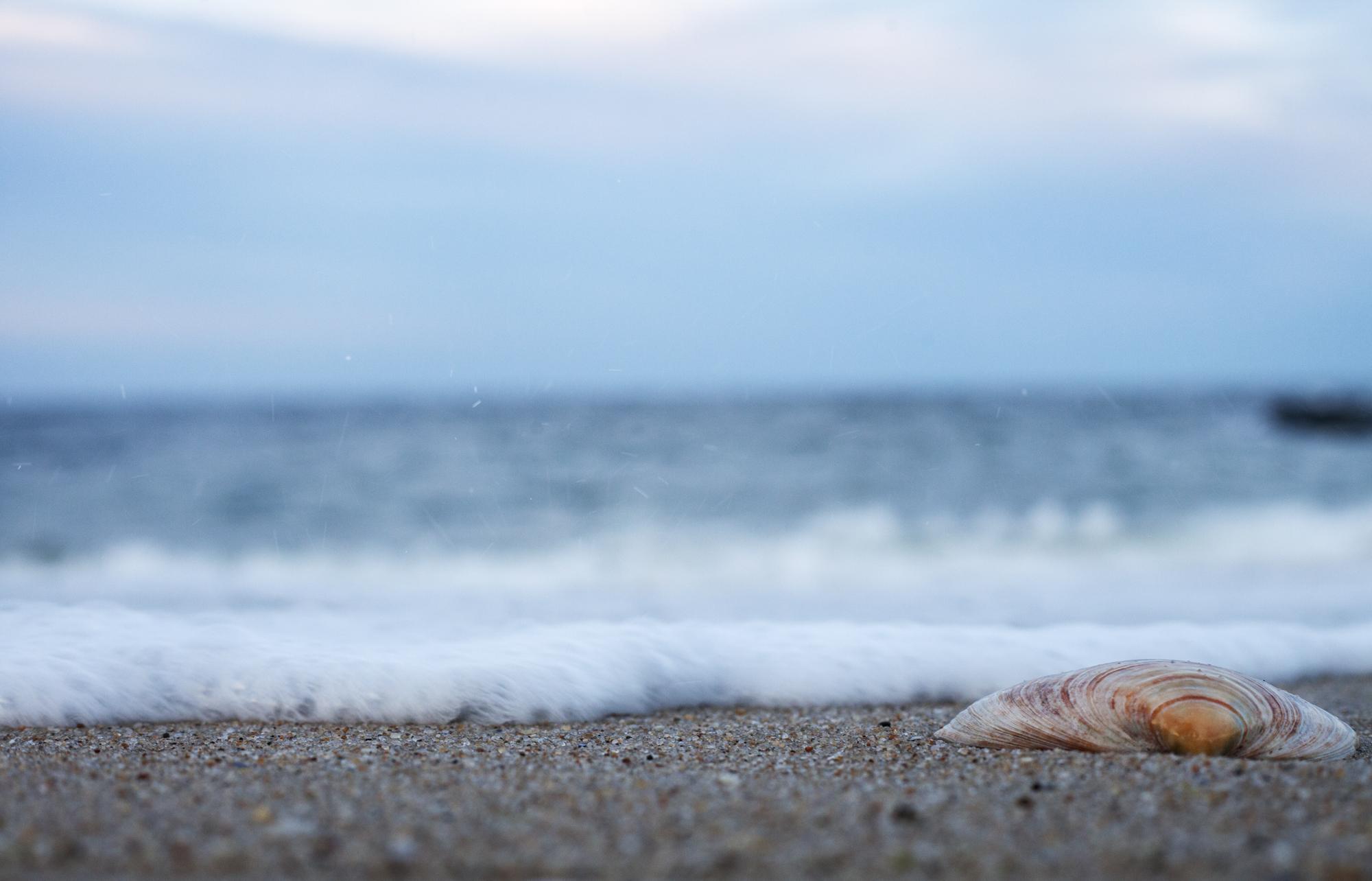 beach_02_web.jpg