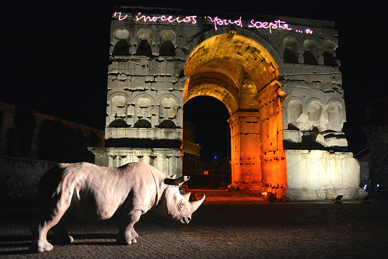 Palazzo Rhinoceros.  Credit: Pino LePera
