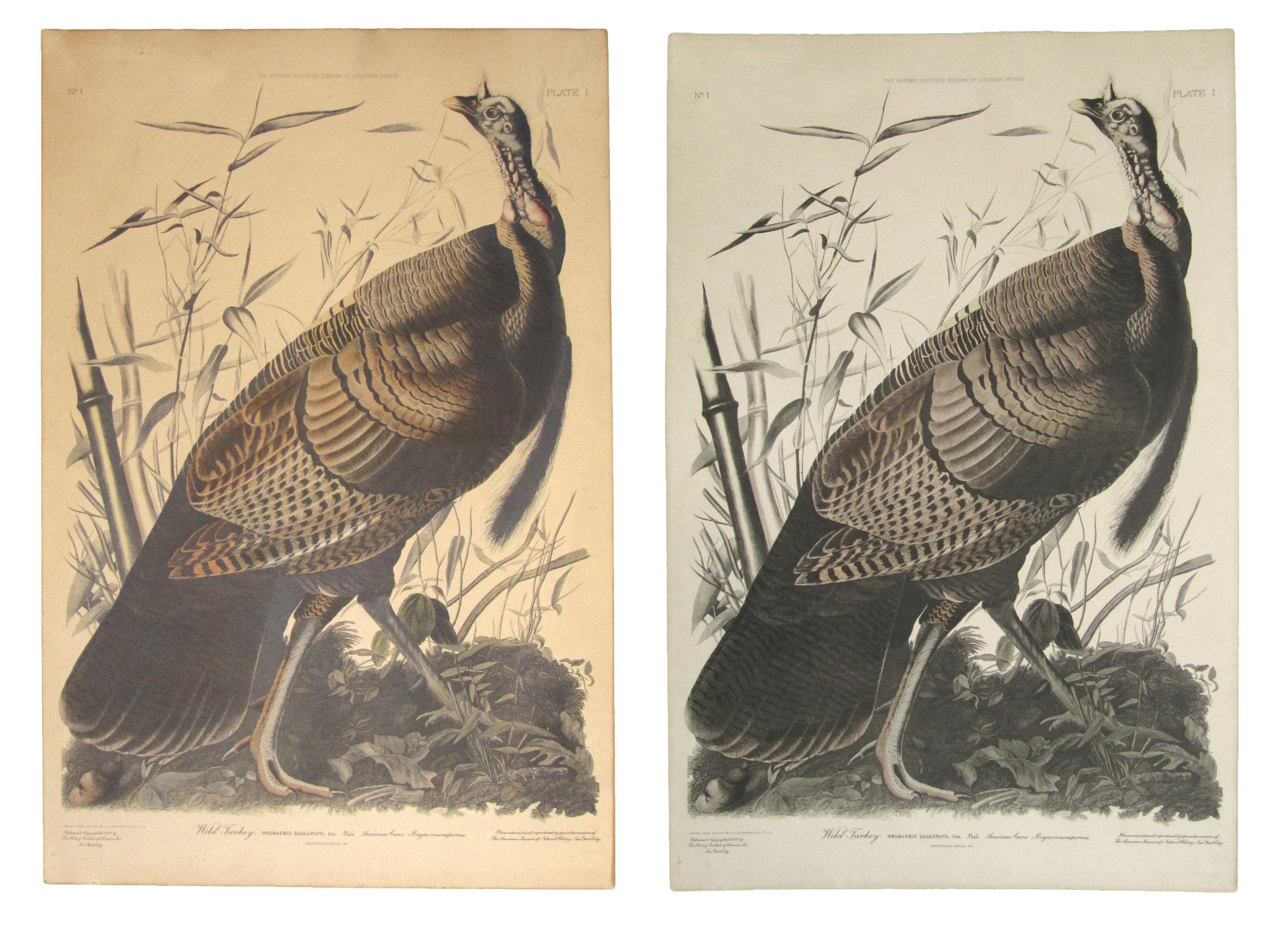 Audubon.jpg