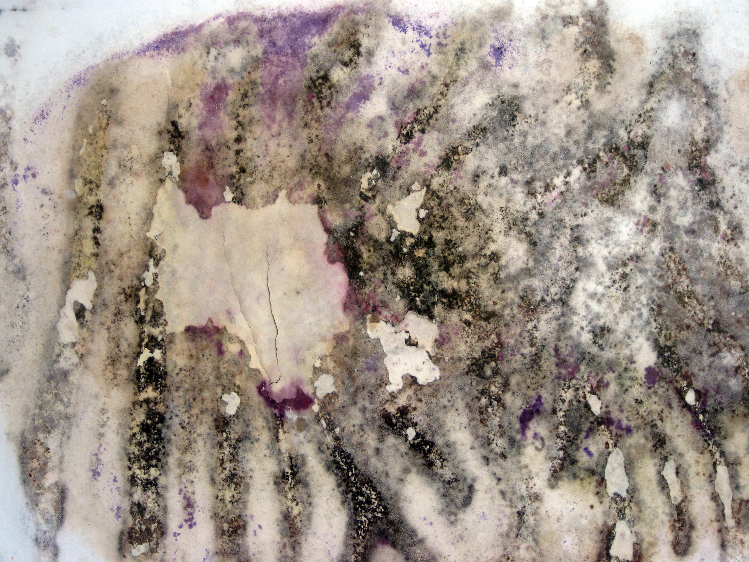 Mold and Paper - Learn about mold on paper, how to prevent it, and what to do if you have a mold outbreak on your collection.