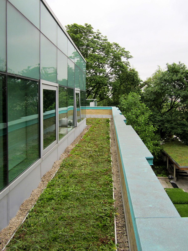 Green roof installation on main house