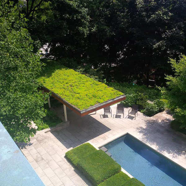 Green roof on pool house