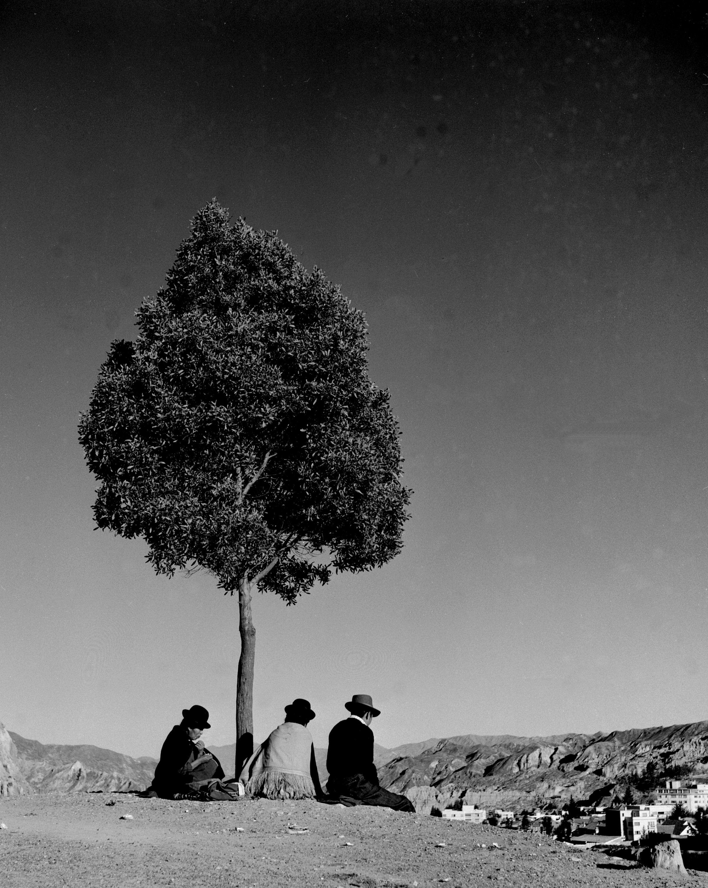 Bolivia 61 47a tree.jpg