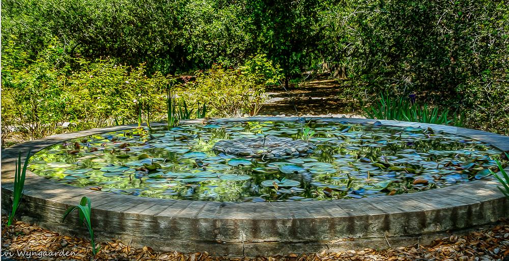 modjeska lily pond oil paint.jpg