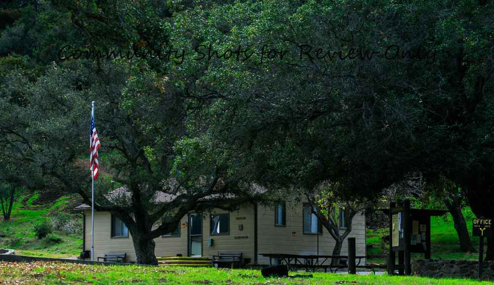 TB8A9772_darken trees.jpg