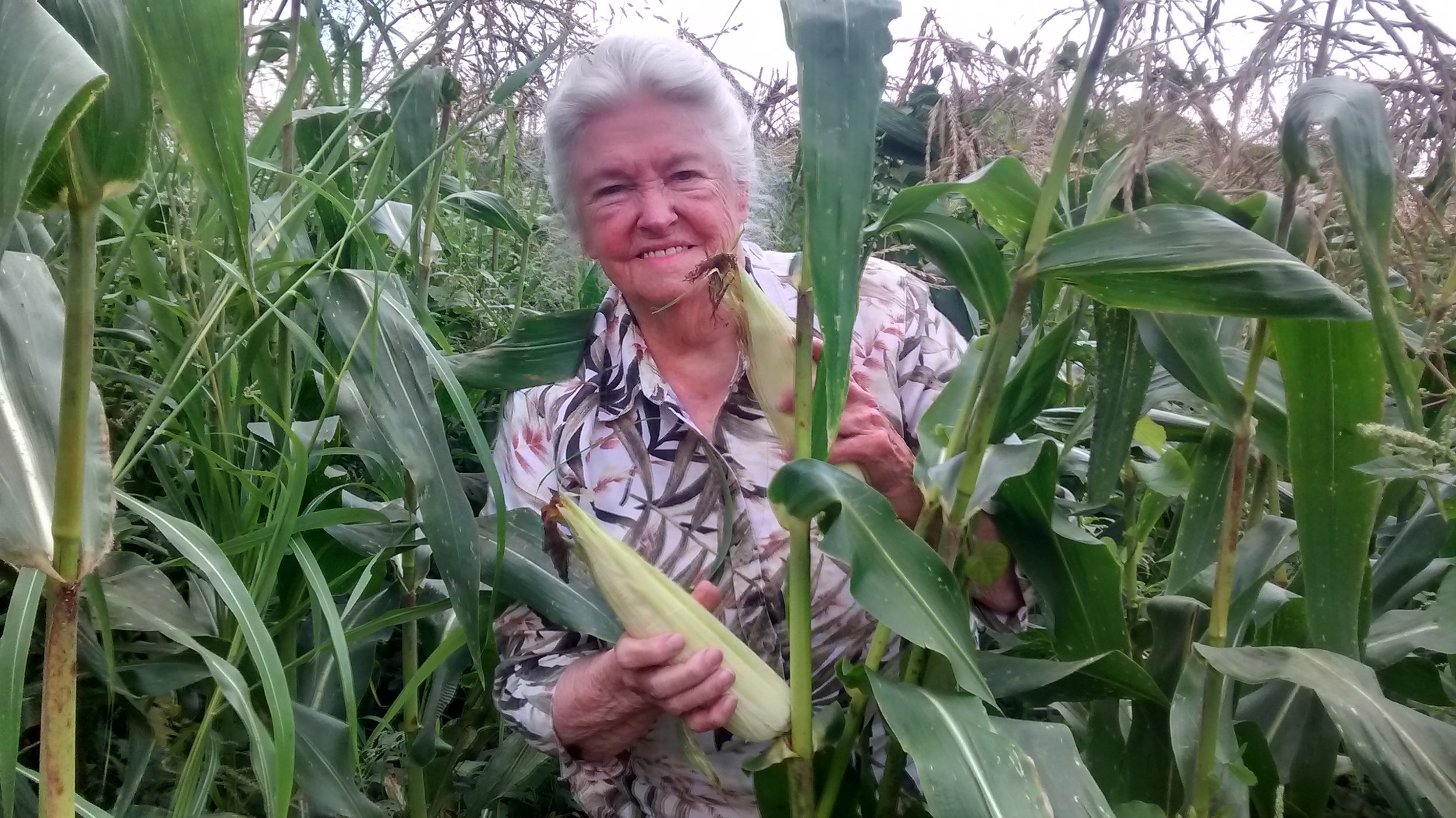 mommy picking corn 7-24-15.jpg