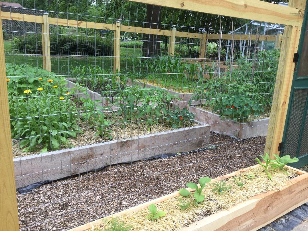 New garden beds for vegetable growing