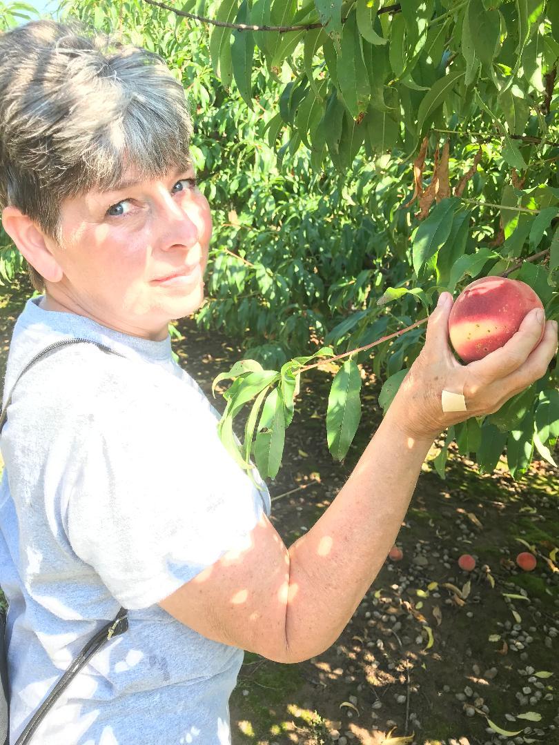 picking peaches Hendersonville NC.jpg