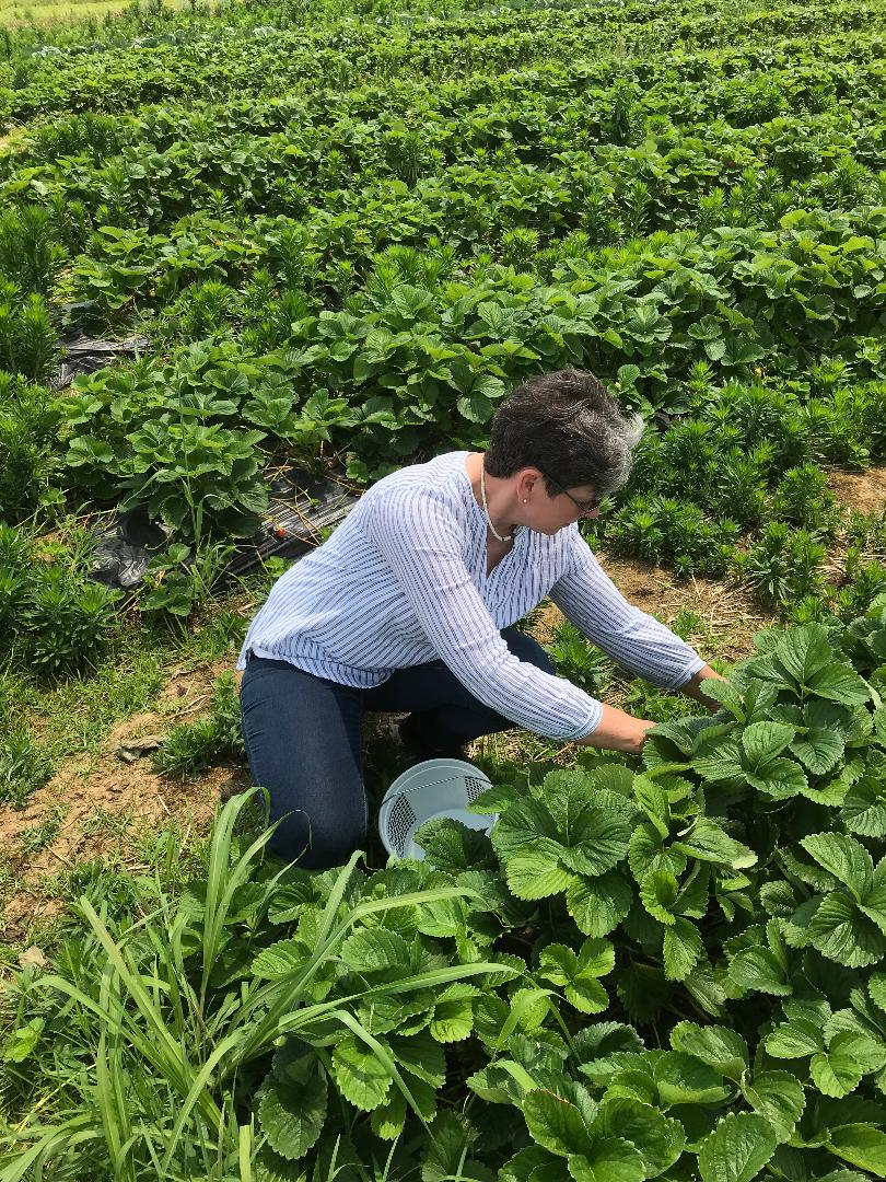 picking strawberries at local farm 2019.jpg