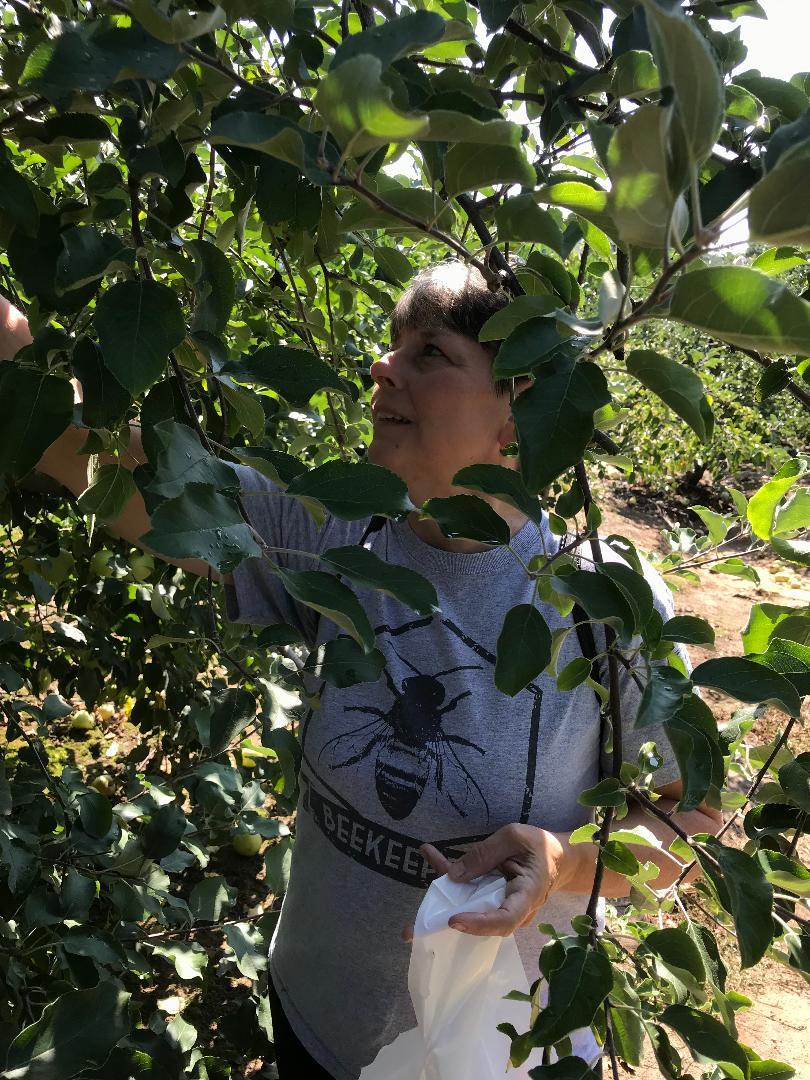 Picking apples Hendersonville NC.jpg
