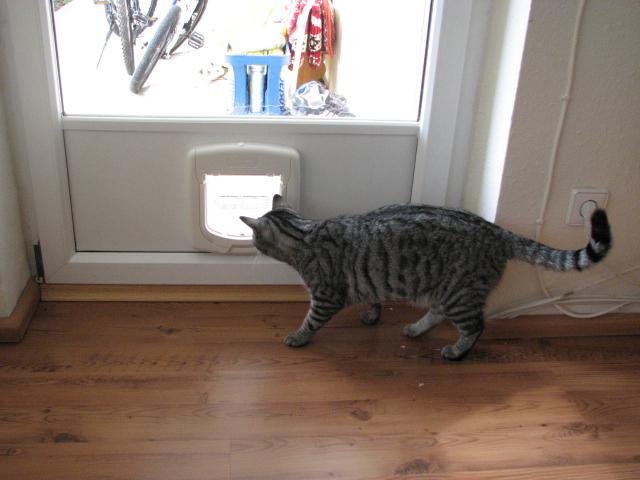 Katzenklappe in Einbaupaneel