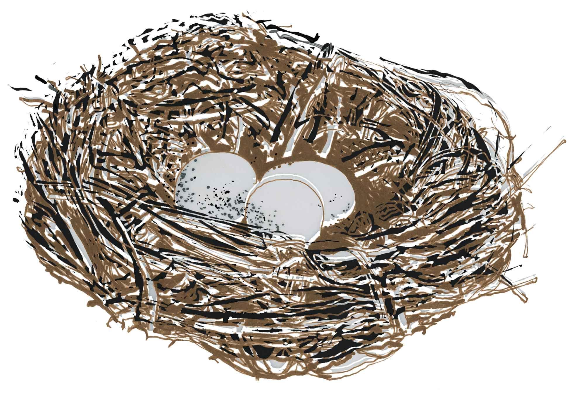 Bird's nest at Hawse End