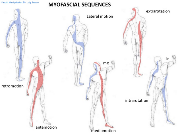 Myofasical Sequences of FM - See how similar in concept they are to other considerations of movement