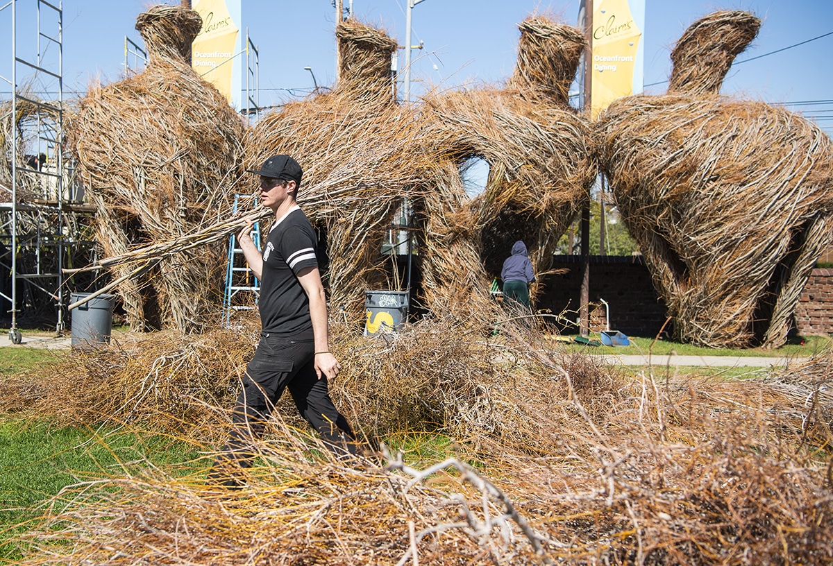 "Image from the  Long Beach Post article  on Buddy Buddy: "" Brian Pritchard volunteers as he separates willow branches for Patrick Dougherty, sculptor, for what is called Stickwork on his latest installation at the Long Beach Museum of Art on Tuesday, Feb.19, 2019. Photo by Thomas R. Cordova."""