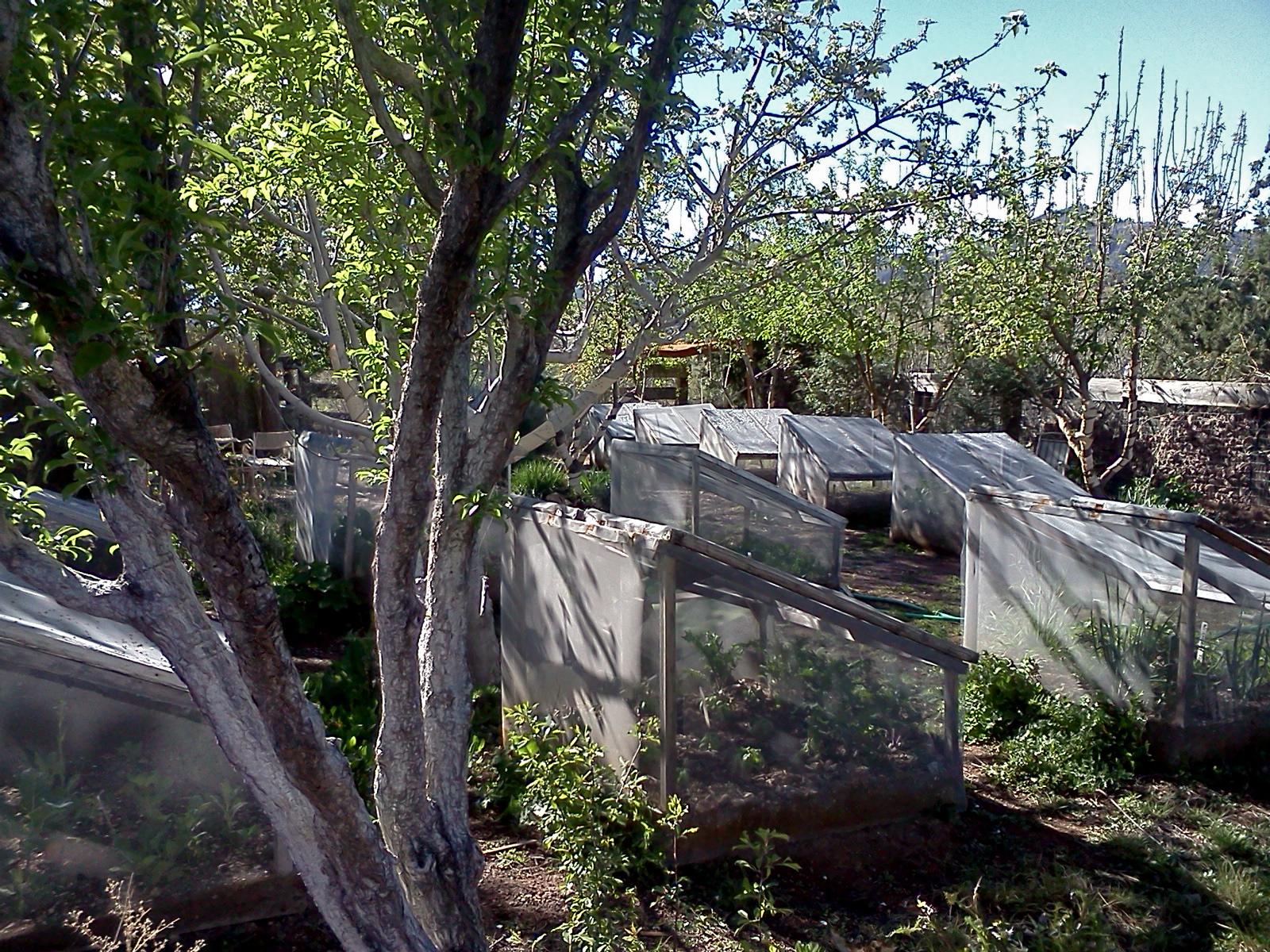 GardenFrames.jpg