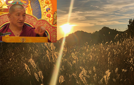 HH Getse Rinpoche Stupa   Find out more   Click Here