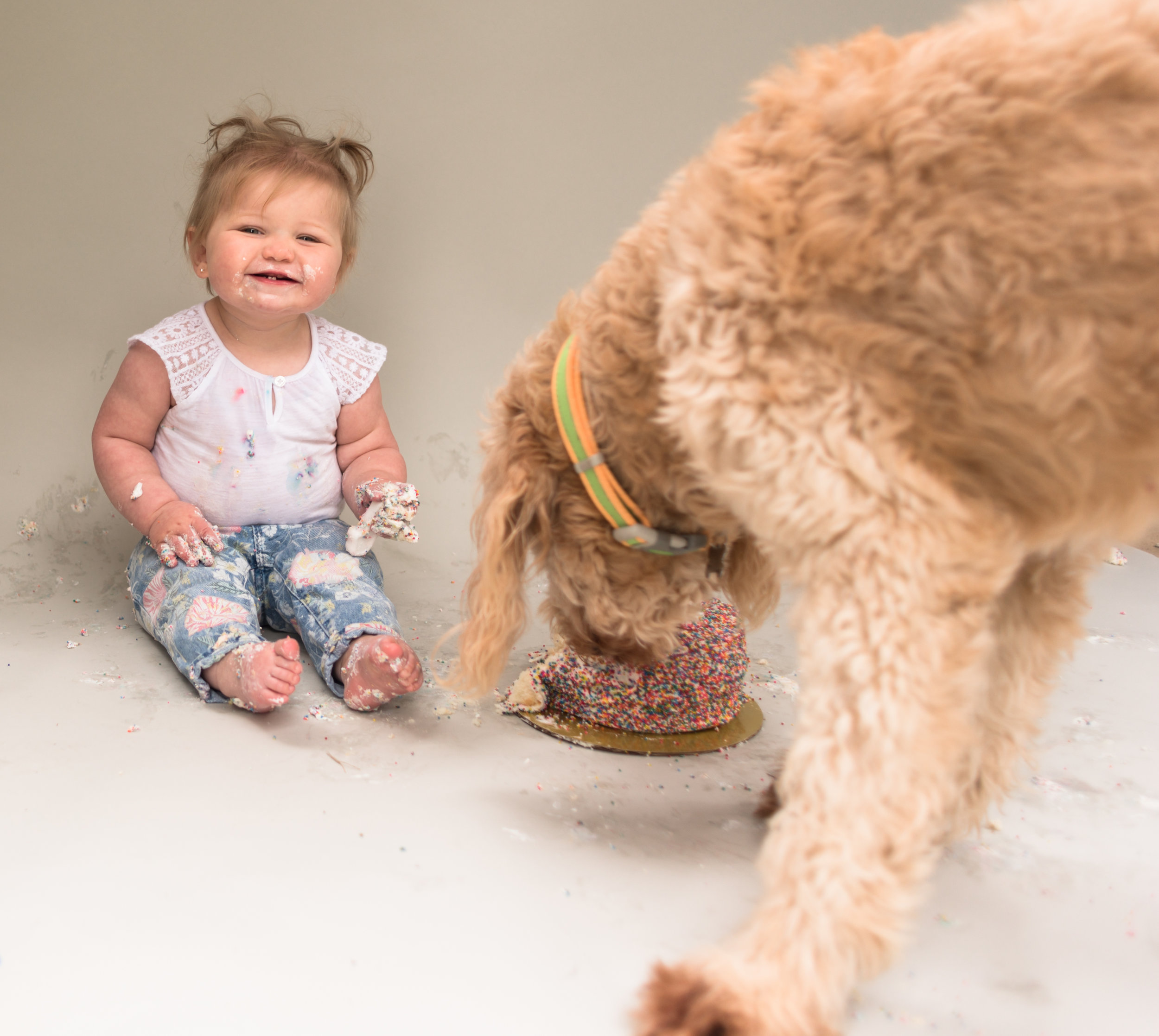 Milestone Photo Session: Cake Smash (with dog)