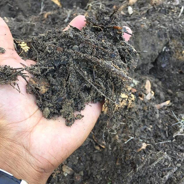 The beginning stage of #compost. Better food=better soil. #true👌🍃🍃🍃📕