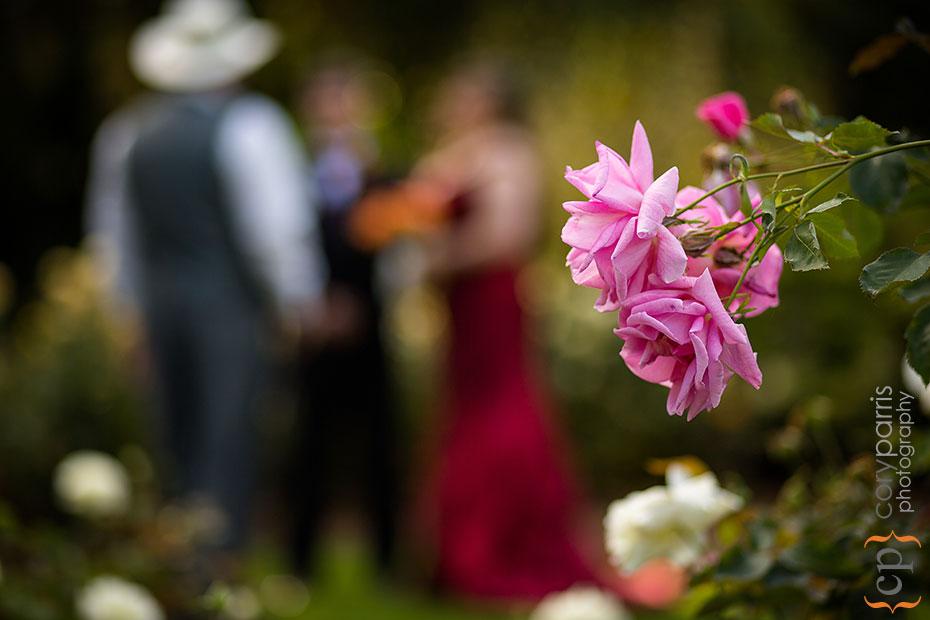 Pink rose at woodland park rose