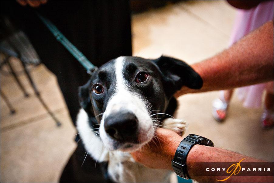 dog portrait by seattle wedding and portrait photographer cory parris
