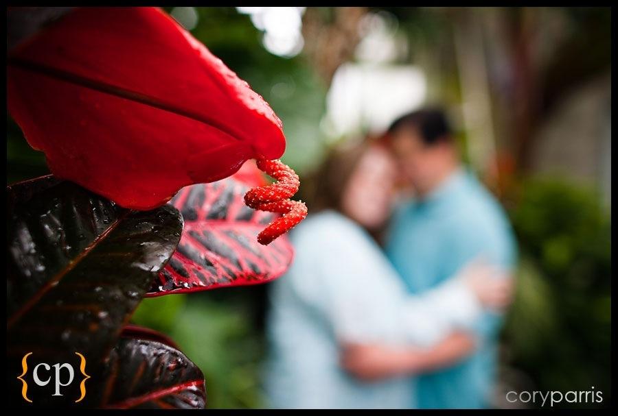 engagement portrait with tropical plants by seattle wedding photographer cory parris