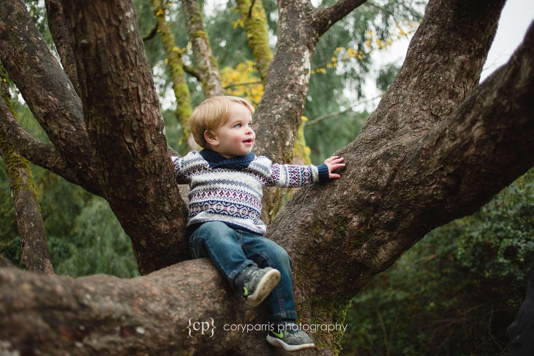 Little boy in a tree at Washington Park Arboretum