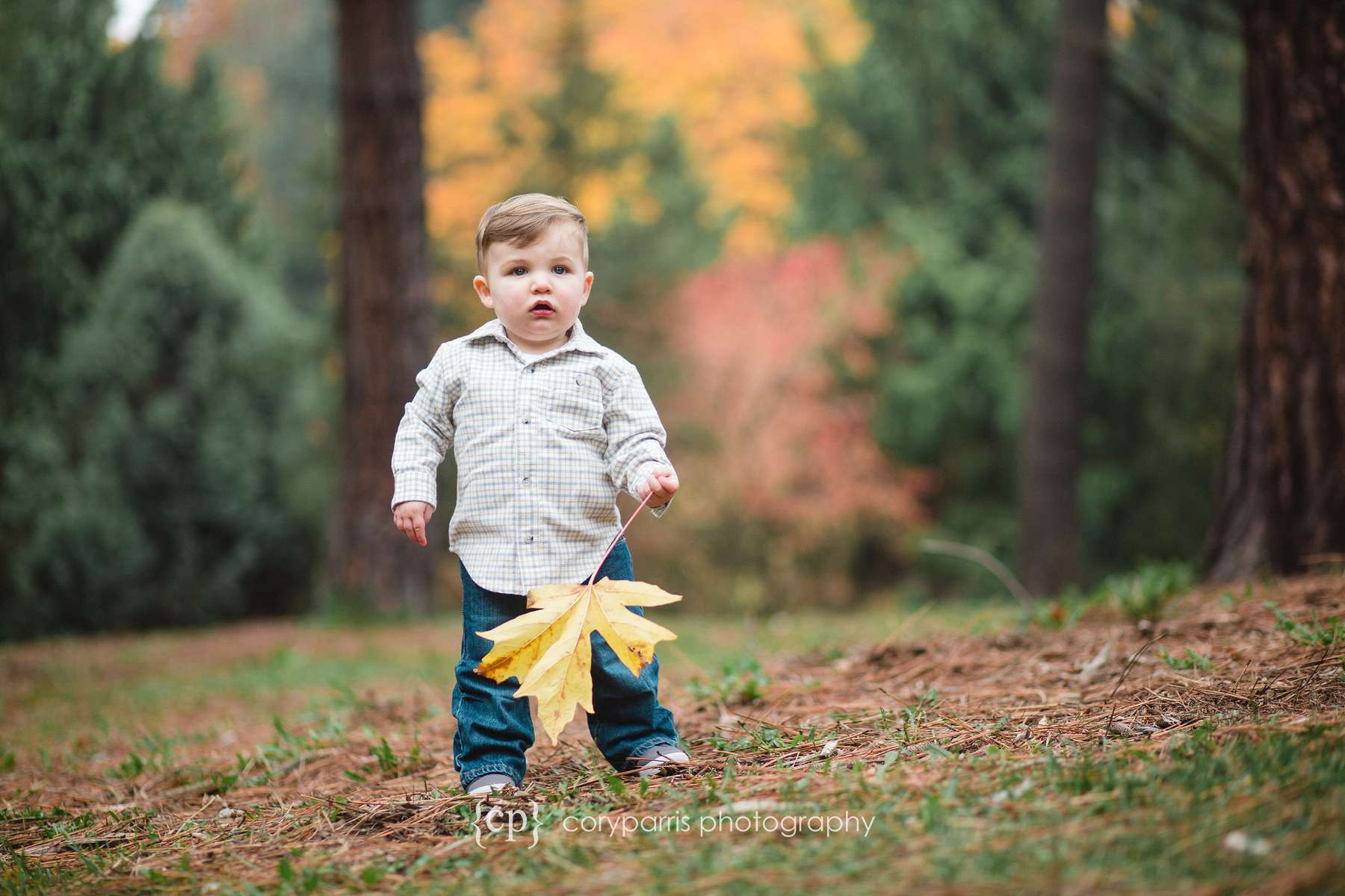 Little boy with fall colors Seattle Portrait Photographer